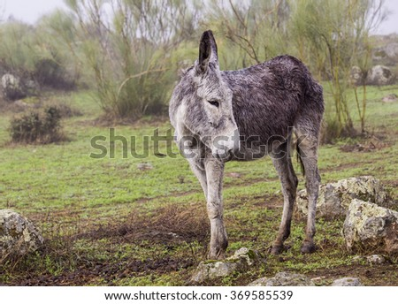 Donkey grazing in the pasture. - stock photo