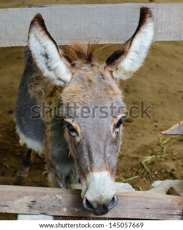 Donkey in a farm , animals series - stock photo