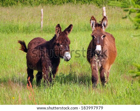 Donkey in a grass field on sunny day - stock photo