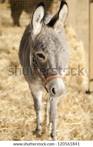 donkey in a horse fair