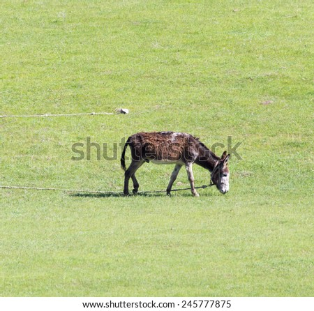 donkey in a pasture on the nature - stock photo