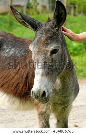 Donkey in a village on a sunny day. - stock photo