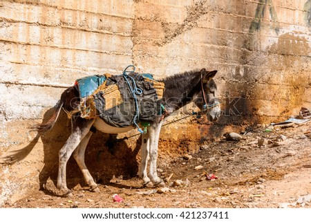 Donkey in Moulay Idriss, the holy town in Morocco, named after Moulay Idriss I arrived in 789 bringing the religion of Islam