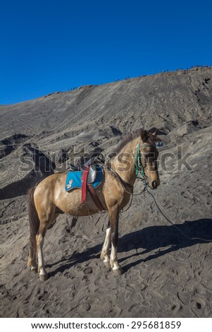 Donkey in Mount Bromo Java - stock photo