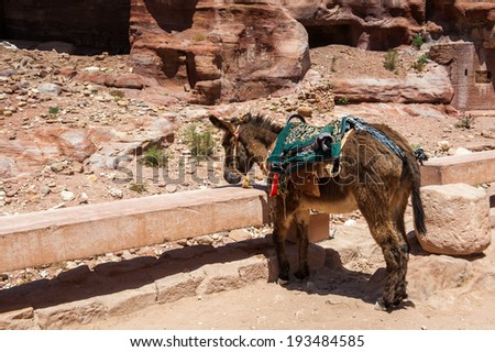 Donkey in Petra (Rose City), Jordan. The city of Petra was lost for over 1000 years. Now one of the Seven Wonders of the Word - stock photo