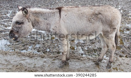 Donkey in the field a wet day - stock photo