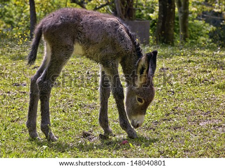 donkey in the meadow - stock photo