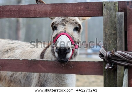 donkey in the zoo