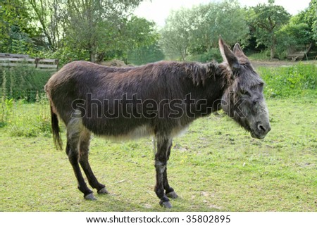 Donkey on a green grass background
