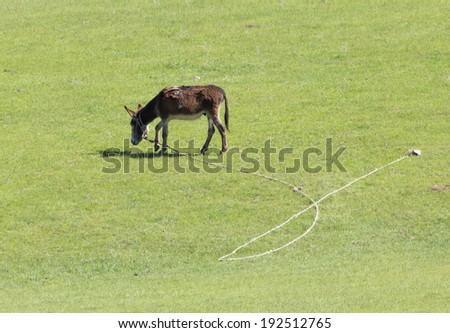 donkey on pasture - stock photo