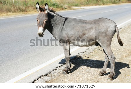 Donkey on the road - stock photo
