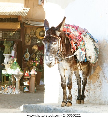 Donkey  on the street of the medina in Fez, Morocco. In the background  shopping street - stock photo