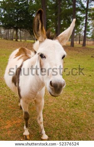 Donkey one - stock photo