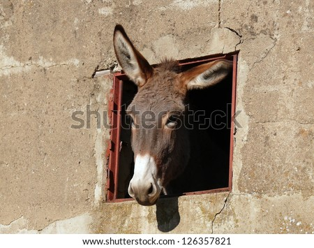 donkey's head looking through a window of an old rural building