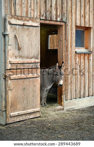 Donkey Stable