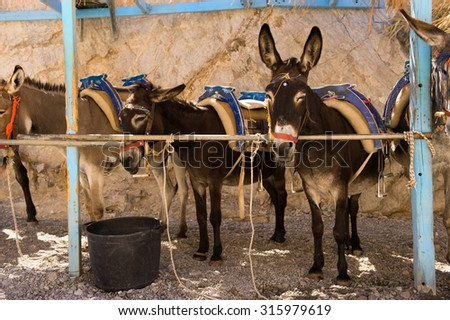 Donkey stand in a row in Greece