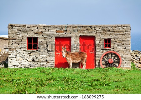 Donkey standing in front a barn in the countryside of Ireland - stock photo