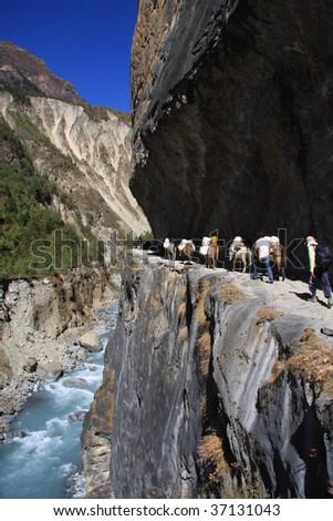 Donkey train in the Annapurna region Nepal. - stock photo