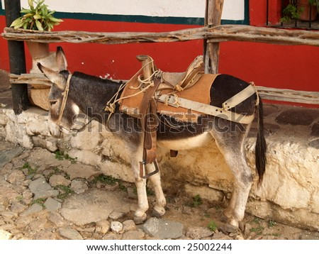 donkey waiting for a ride, Copala Mexico - stock photo