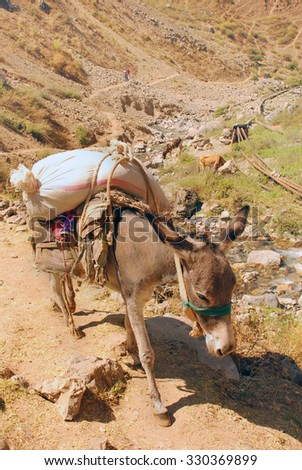 Donkey with a bag in the mountains of Uzbekistan