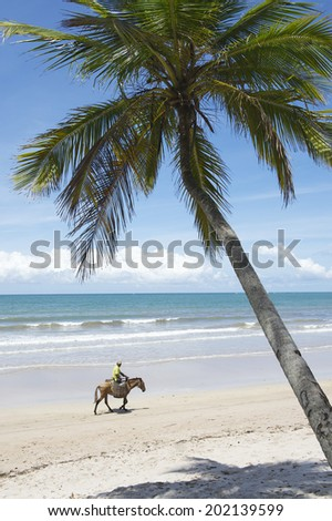 Donkey with traditional baskets traveling along rustic beach in a typical northeast Brazil scene - stock photo