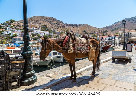 Donkeys at the Hydra island  in a summer day in Greece - stock photo