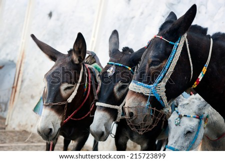 Donkeys in Fira on the Santorini island, Greece. They are a local symbol and take people, tourists to the port down the cliff. - stock photo