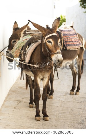 Donkeys in Lindos, Greece