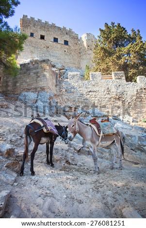 Donkeys in Lindos on the Rhodos island, Greece. - stock photo