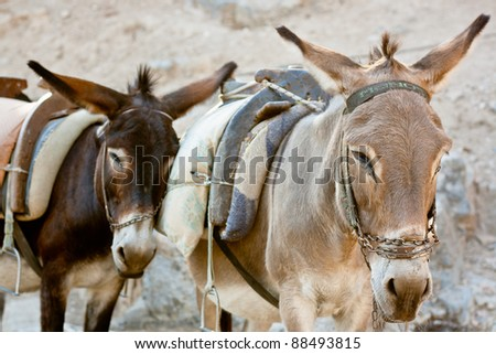 Donkeys of Greece - stock photo