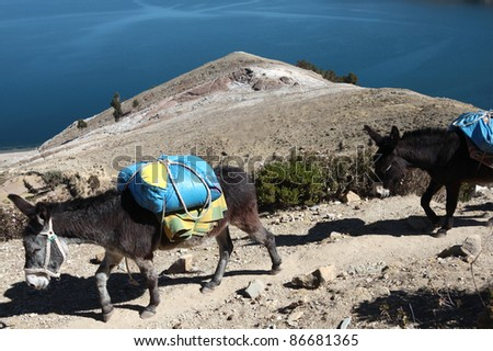 donkeys on lake titicaca - stock photo