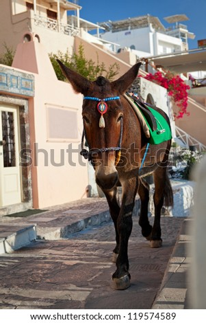 Donkeys waiting passengers at the port of Fira. Santorini Greece - stock photo