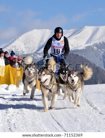 DONOVALY, SLOVAKIA - FEBRUARY 12: Braeckmans Harry of Italy participating in the 10th World sleddog racing Championship F.I.S.T.C. February 12, 2011 in Donovaly, Slovakia - stock photo