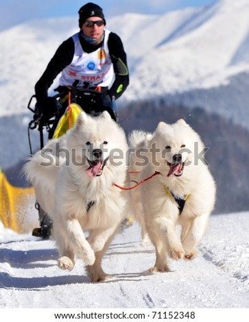 DONOVALY, SLOVAKIA - FEBRUARY 12: Duprat Lionel of France participating in the 10th World sleddog racing Championship F.I.S.T.C. February 12, 2011 in Donovaly, Slovakia - stock photo