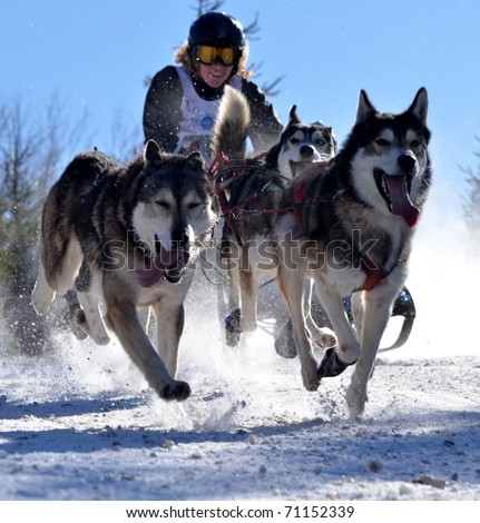 DONOVALY, SLOVAKIA - FEBRUARY 12: Laboure Jean Baptiste of France participating in the 10th World sleddog racing Championship F.I.S.T.C. February 12, 2011 in Donovaly, Slovakia - stock photo
