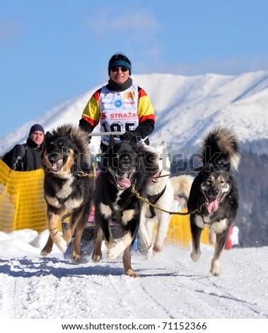 DONOVALY, SLOVAKIA - FEBRUARY 12: Sauerhofer Christa of Germany participating in the 10th World sleddog racing Championship F.I.S.T.C. February 12, 2011 in Donovaly, Slovakia - stock photo