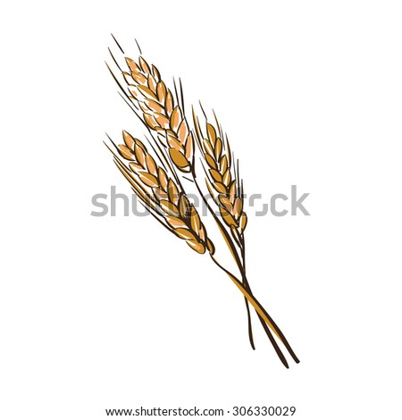 doodle wheat spikelets isolated on a White Background - stock photo