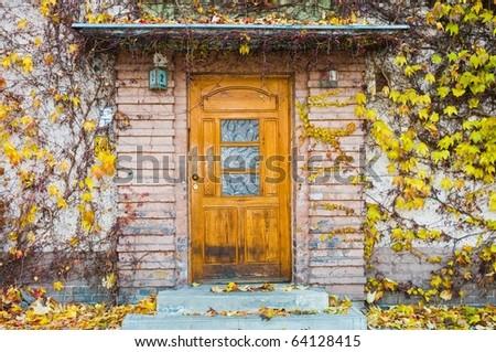 Door with yellow virginia creeper - stock photo