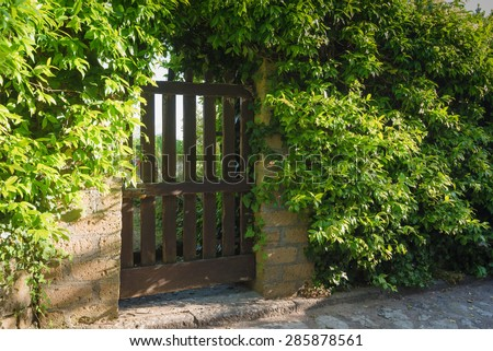 Doors with surrounding plant on a sunny day, in an old Tuscan town - stock photo
