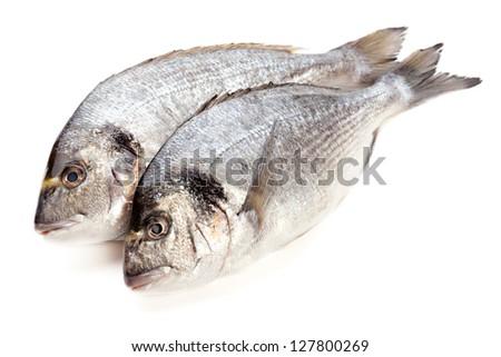 Dorado fish on white background - stock photo