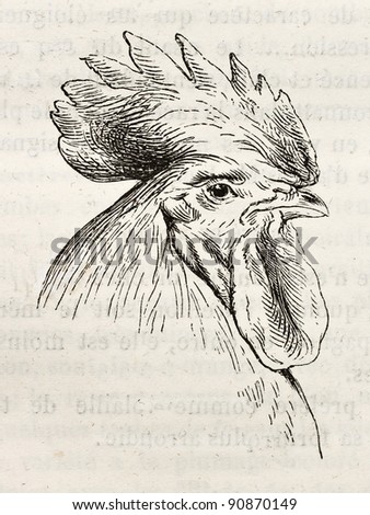 Dorking chicken head old illustration. Created by Jacque and Lavieille, published on Merveilles de la Nature, Bailliere et fils, Paris, ca. 1878 - stock photo