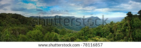 dorrigo tropical cold rainforest blue mountains australia panorama green tall trees valley - stock photo