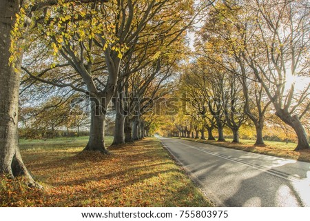 Dorset, UK 11/11/2017 - Avenue of Autumn Colour