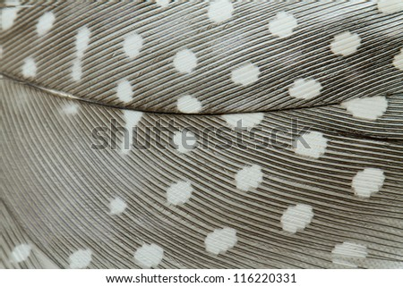 Dot Feather Close Up Detail - stock photo