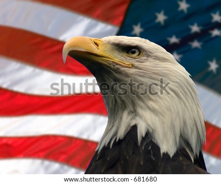 Double exposure:  Bald Eagle in the foreground with the American flag blurred in the background.