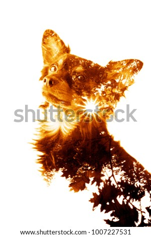 Double exposure made dog with tree and sun.