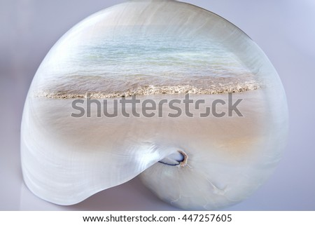 Double exposure nautilus shell with a beach