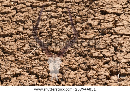 Double exposure of an impala skull over cracked dried earth due to a world drought and climate change, illustrating the effects it has on wildlife - stock photo