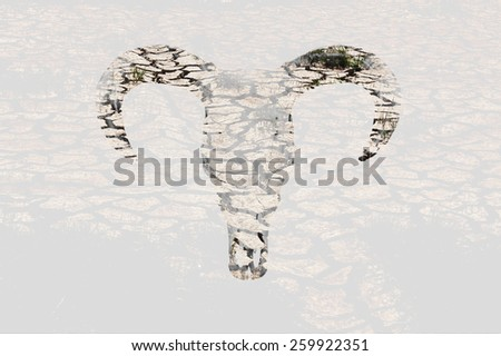 Double exposure of Cow skull on Drought parched farmland - stock photo