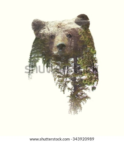 Double Exposure Portrait of Bear and Green Forest  - stock photo